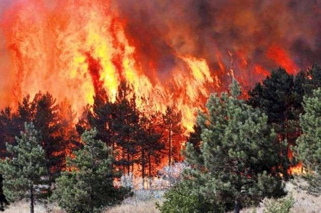 Шумските пожари во Русија зафатија површина од 17.500 хектари