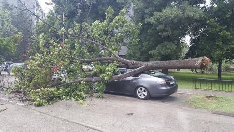 ФОТО: Откорнато дрво смачка автомобил во Тафталиџе