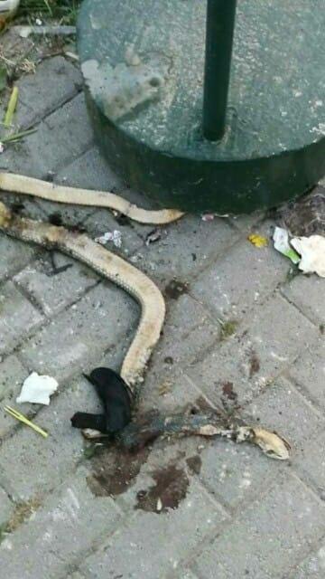 """""""Аеродром во моето срце"""": Змии во општината која Марин и Шилегов направија да личи на џунгла (ФОТО)"""