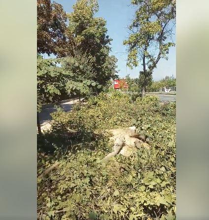 Повторно масакар на дрвјата во Капрош, ништо од ветувањата на Богоев за здрава животна средина