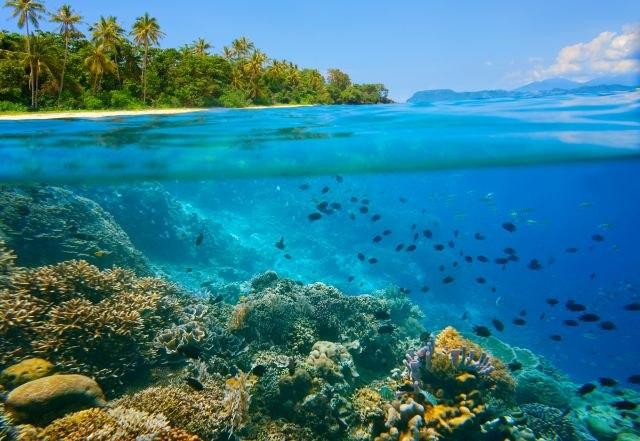 Стаорците ги загрозуваат коралните гребени