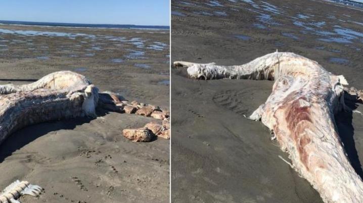 Пронајдено морско чудовиште: Луѓето преплашени, а експерт објасни какво животно е ова (ФОТО)