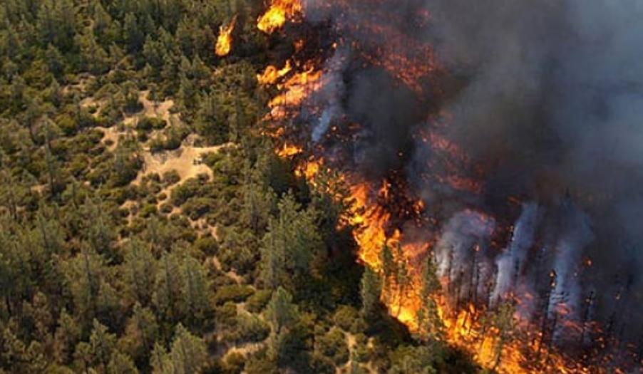 Кој е виновен за огромната трагедија? Пожарот во Грција најверојатно е подметнат!