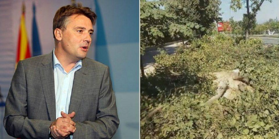 Повторно сеча на дрва во Скопје: Шилегов ветуваше европска зелена престолнина, а испорачува исчезнување на зеленилото (ВИДЕО)