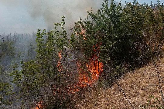 Опожарена шума над Битола
