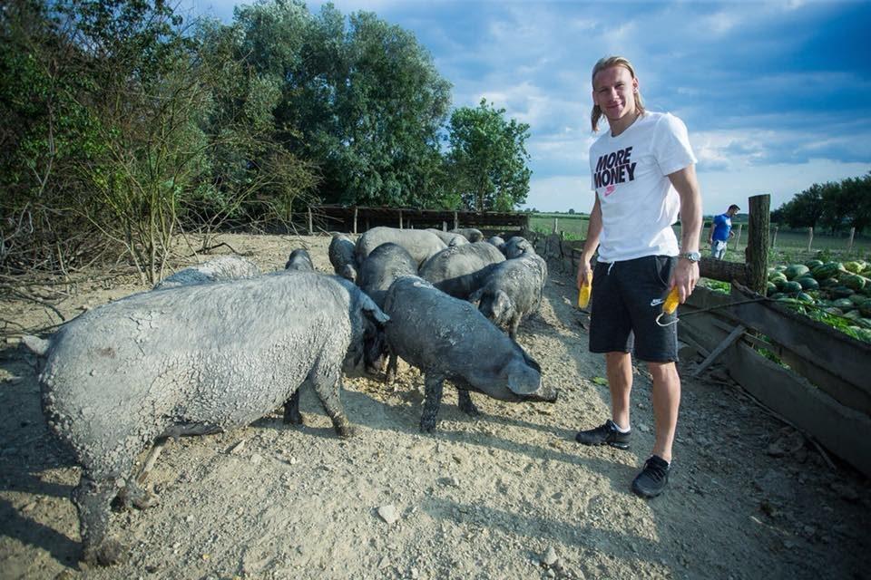 Каква легенда: Вида од терените на СП заврши во свињарник и ранеше прасиња, а фановите се мајтапеа со него (ФОТО)
