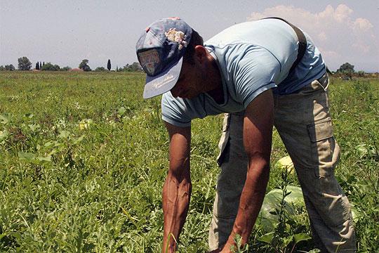 Младите во ЕУ избегнуваат земјоделски работи
