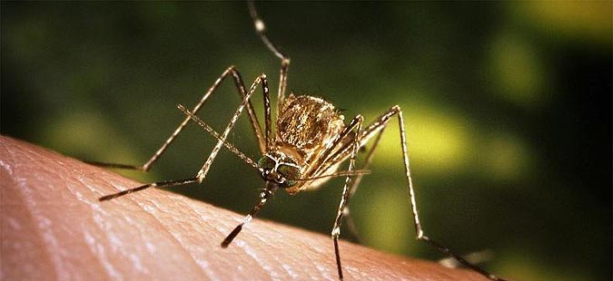 Се зголемува бројот на починати од вирусот Западен Нил во Грција