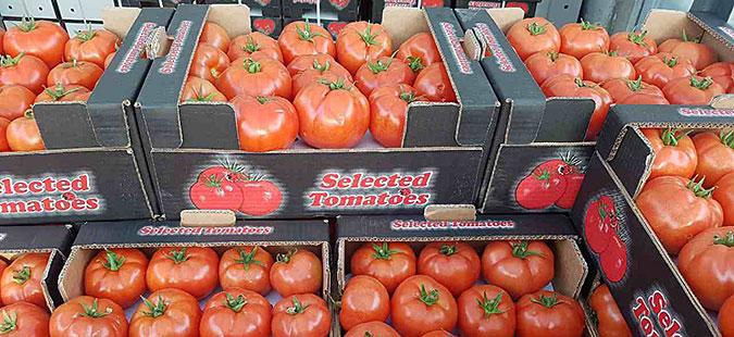Македонија 27-ма по извоз на домати во светот, 33-та по извоз на лубеници