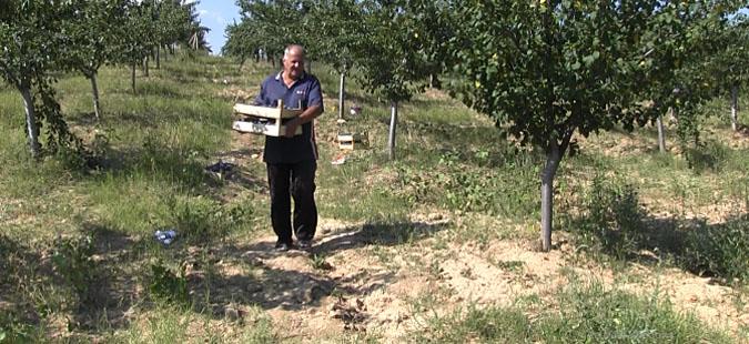 Производителите на слива не добија решение за откупот од надлежните, утре ќе го блокираат патот кон границата со Бугарија