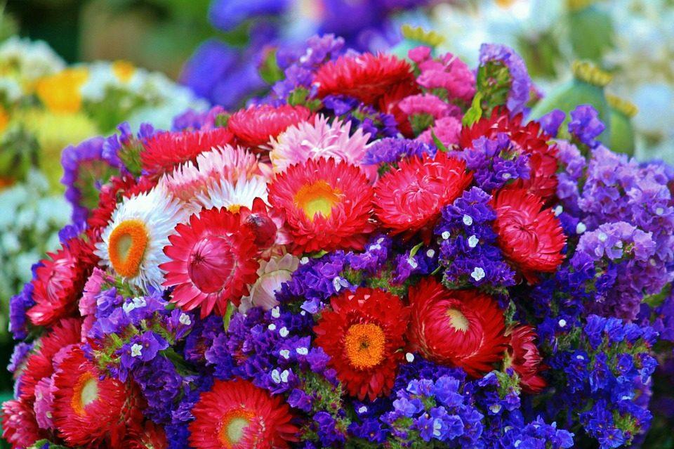 Не стивнуваат реакциите од јавноста до Владата: Посадите ли цвеќиња, на улица ќе ви се посадам!
