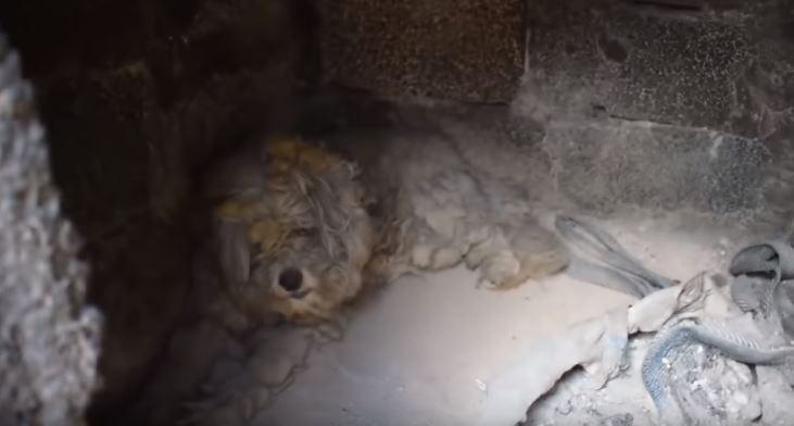 ВИДЕО: Куче го преживеа пожарот во Грција скриено во печка