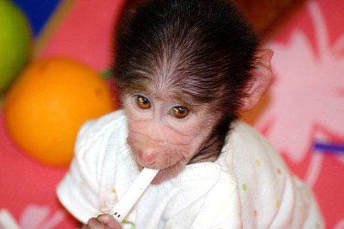 ФОТО: Се сеќавате на мајмунчето Лука од Зоо Скопје, еве како изгледа сега