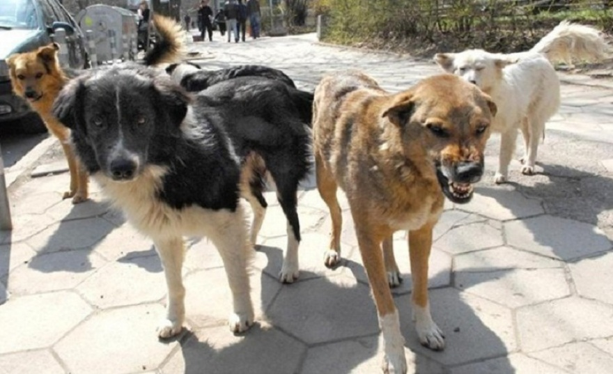 Кучиња скитници повторно напаѓаат, Шилегов ништо не презема