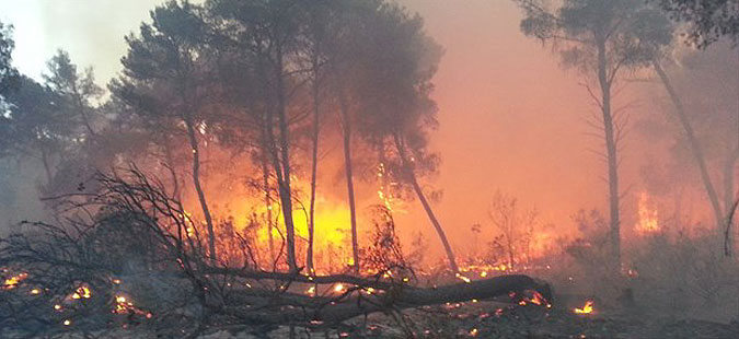 Пожар кај Шибеник, го гаснат 40 пожарникари