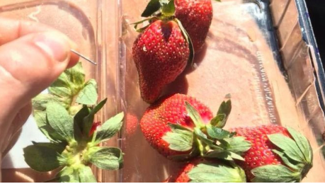 Нашле игли за шиење во јагодите што ги јаделе, спроведена истрага