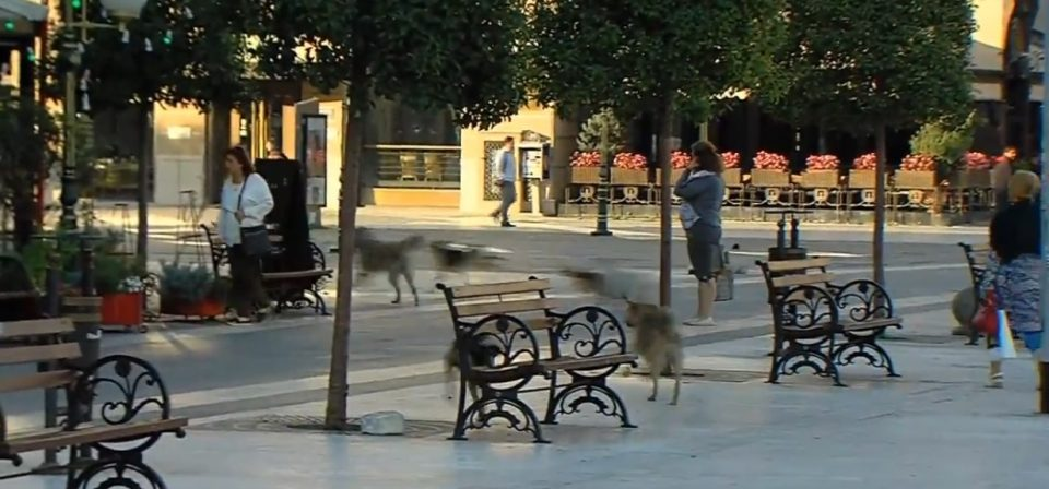 Бројот на инциденти расте, градот нема решение за проблемот со кучињата скитници