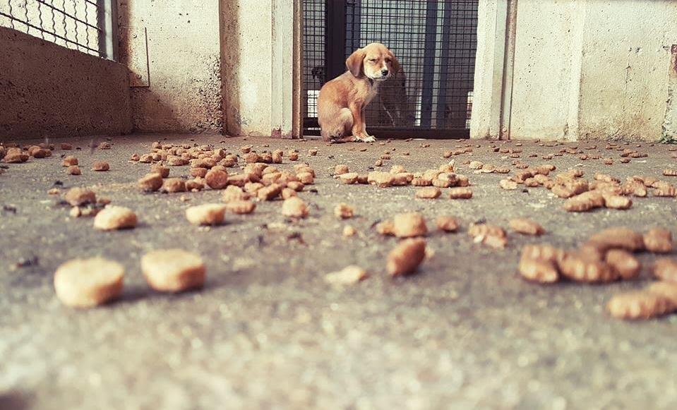 Вдомени десет кучиња во акцијата за згрижување бездомни животни