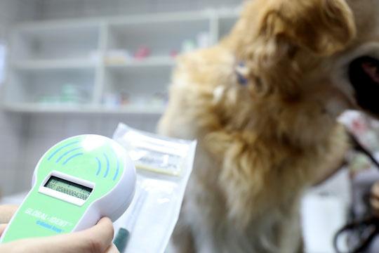 Бесплатно чипирање на домашните миленици до Нова година- следуваат зајакнати контроли и санкции