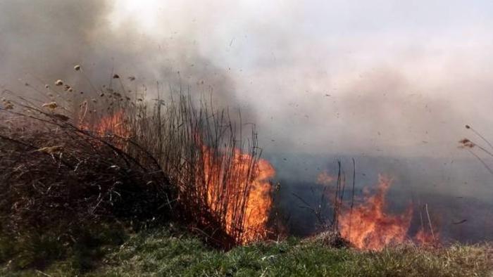 """ЈП """"Македонски шуми"""": Да ги зачуваме шумите од пожари"""