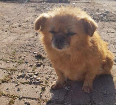 """Акција за вдомување бездомни кучиња од Стационарот """"Вардариште"""" во следните 7 дена"""