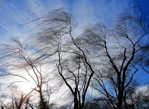 Утре ветeрот носи африканска прашина, обоен дожд и грмежи
