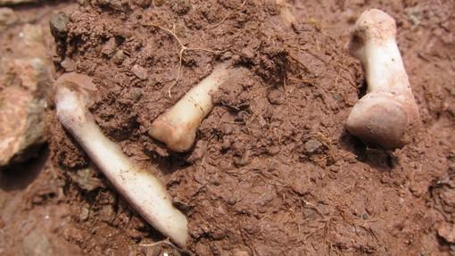 Коски пронајдени во охридско, полицијата врши увид поради сомневање дека се човечки остатоци