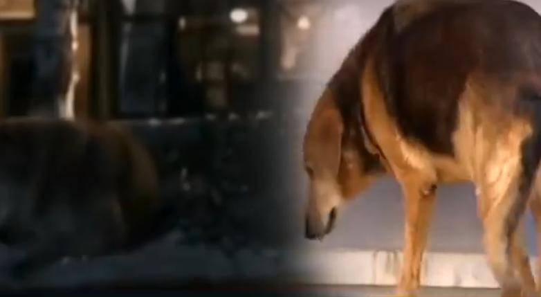 ВИДЕО: Ова куче 8 години го чекаше сопственикот по неговата смрт, сега запрело и неговото срце