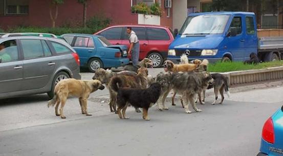 Град Скопје ќе формира јавно претпријатие за третман на уличните животни
