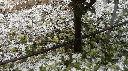 Незапаметено невреме со град во Преспа, голема штета на јаболката
