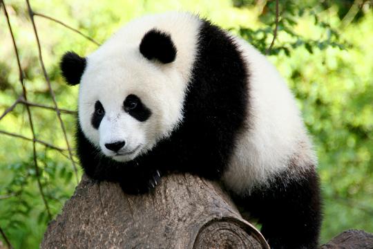 Светски ден на животните – секој ден исчезнуваат по 100 видови