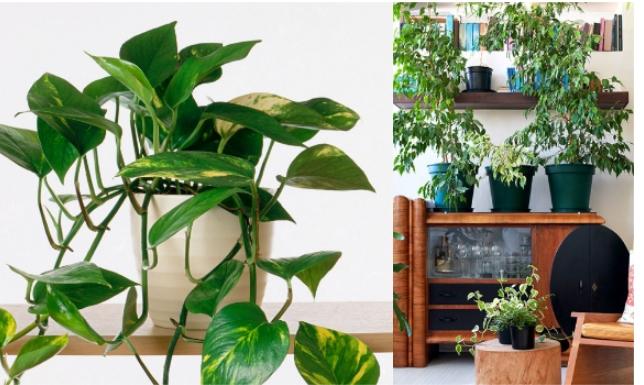 Како да им помогнете на собните растенија да ја преживеат зимата?