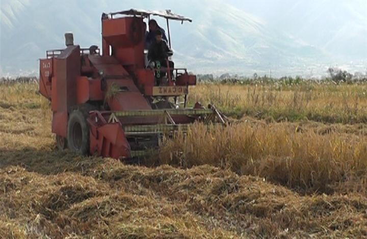 Заврши жетвата на ориз во кочанско