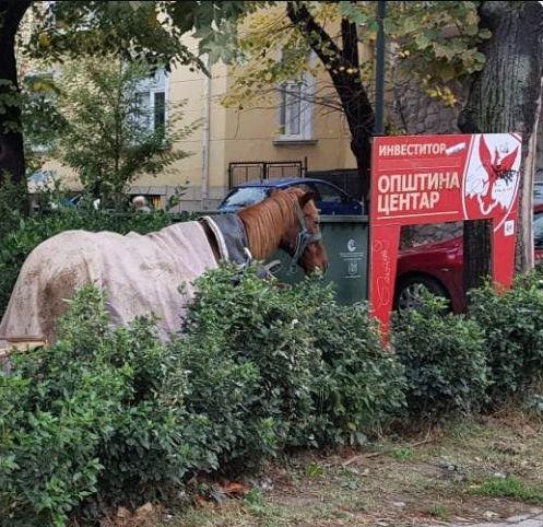 Една година Богдановиќ: Kоњи и овци се шетаат низ центарот на Скопје (ФОТО)