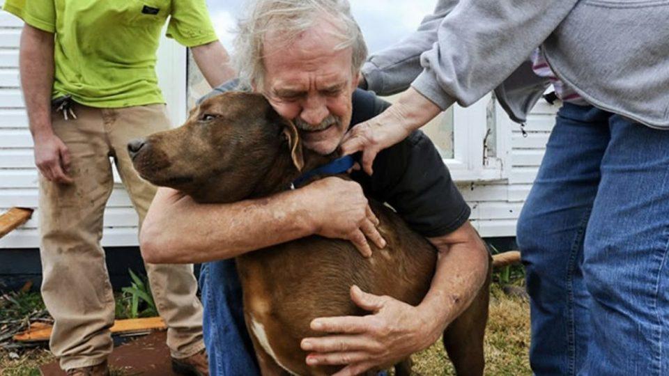Кога куче ќе го види сопственикот по долго време (ВИДЕО)