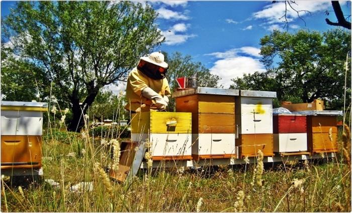 Пчелните семејства на удар од вонредната состојба, пчеларите бараат дозволи за движење