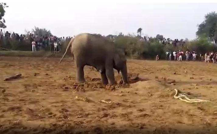 Слоница цели 11 часа копаше дупка: Ќе останете без зборови кога ќе видите што извади од неа