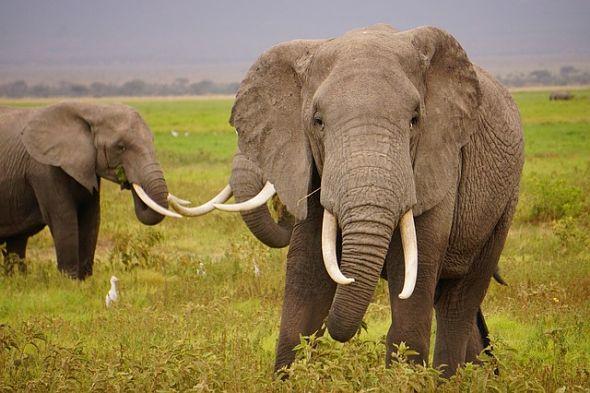 Во Индија е отворена првата болница за слонови