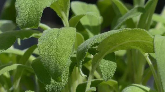 Експертите пресудија: Ова се трите најдобри билки за секој дом