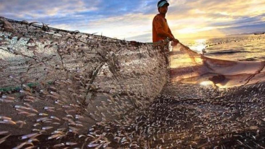 Почнува аплицирањето за субвенции за рибарство и аквакултура