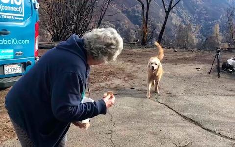 Куче кое го преживеало пожарот во Калифорнија го чувало домот со недели