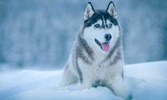 Ова се реакциите на кучињата кога првпат ќе здогледаат снег (ВИДЕО)
