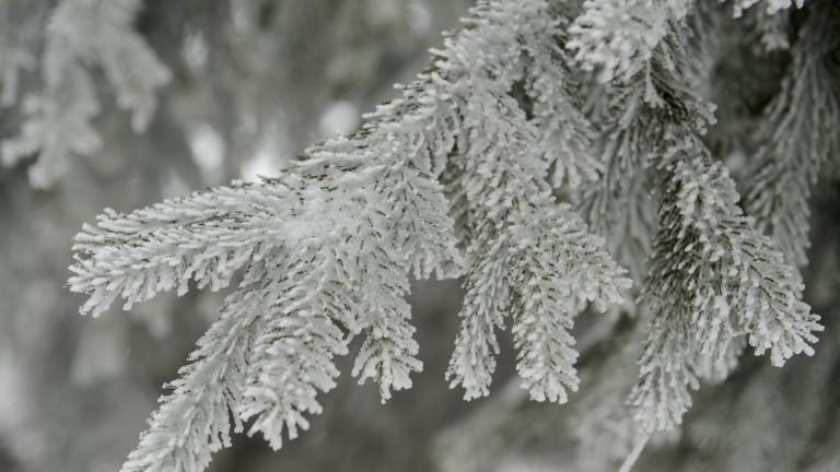 Снег пред новогодишната ноќ, температурата од минус три до три степени