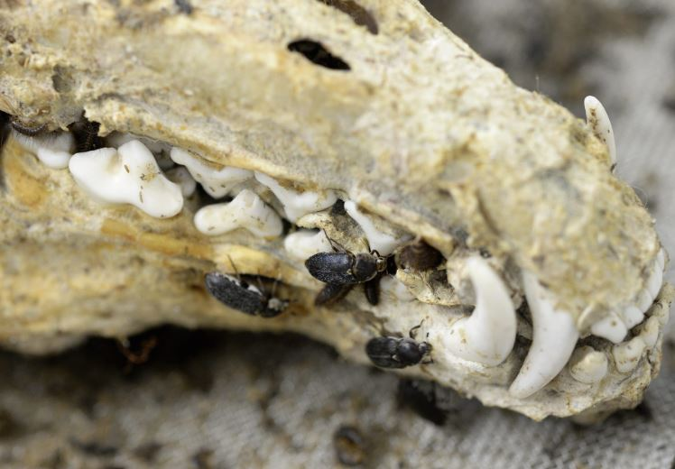 Откриено наоѓалиште на праисториски животни во југозападна Турција