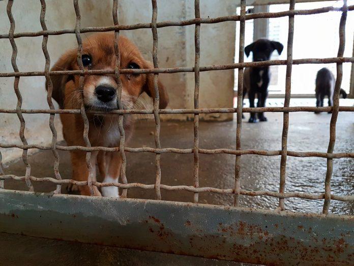 Активистите лути на Шилегов: Што се случува во Вардариште со донациите, храна, покривки, вакцини за згрижување на кучињата