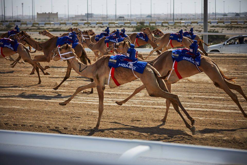 Играчите на ПСЖ одржаа луди трки со камили (ВИДЕО)