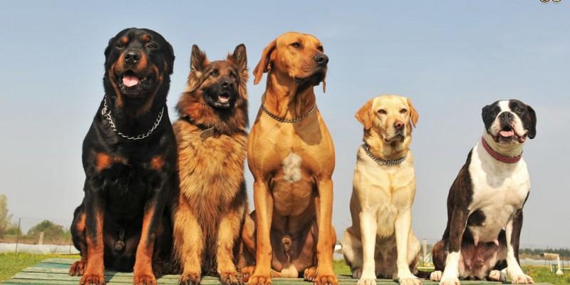 Само една земја на светот нема кучиња скитници: Еве како го решиле проблемот