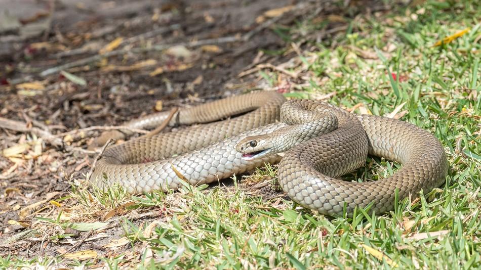 Змија во Зоолошка во Сиднеј ќе биде со име на најомразена нечија поранешна партнерка