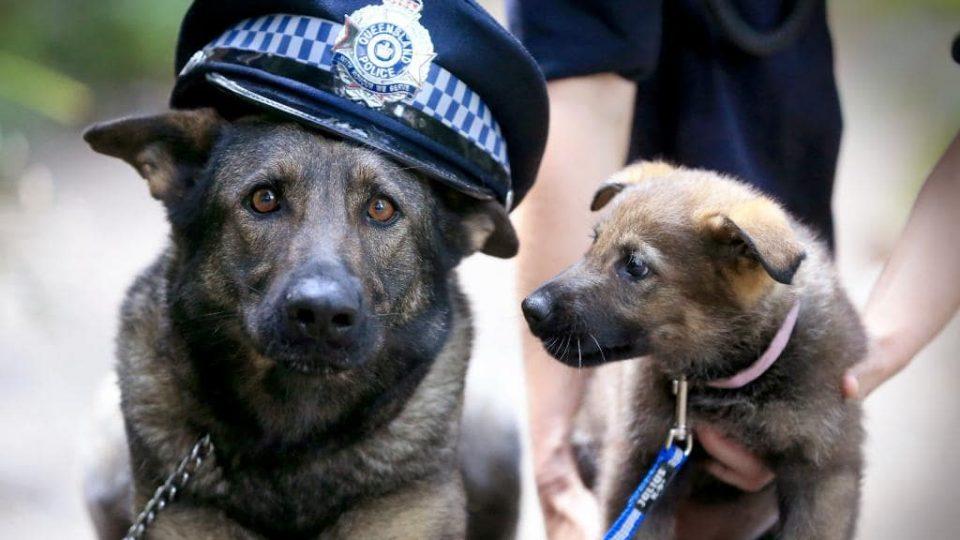 Во утрешната штампа ќе читате: Кучето на Мира Дизел вработено во гранична полиција