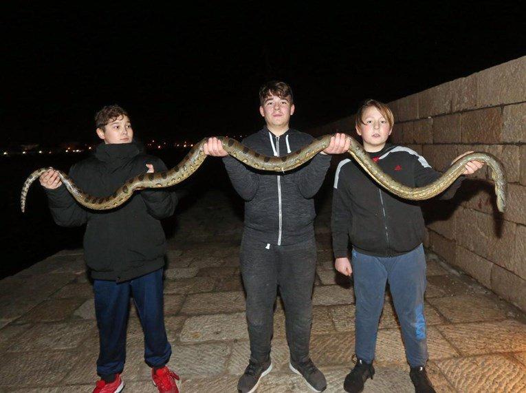 Анаконда во Хрватска: Деца кај Водице од морето извадија змија долга 2,5 метри (ФОТО)